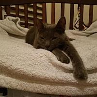 Adopt A Pet :: Grayson - Homewood, AL