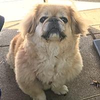 Adopt A Pet :: WINNIE - SO CALIF, CA