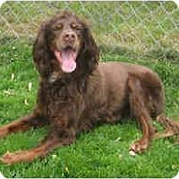 Adopt A Pet :: Penny - DeKalb, IL