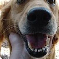 Adopt A Pet :: Lilly - Foster, RI