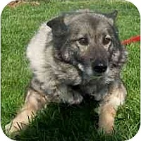 Adopt A Pet :: Sophia - Belleville, MI