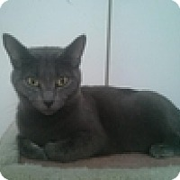 Adopt A Pet :: Tricia - Vancouver, BC