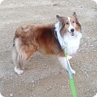 Adopt A Pet :: Jack - Circle Pines, MN