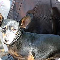 Adopt A Pet :: Pepper - Tinton Falls, NJ
