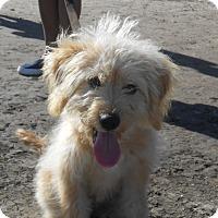 Adopt A Pet :: Waylon - Lockhart, TX