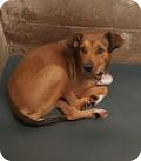 Shepherd (Unknown Type) Mix Dog for adoption in Fort Smith, Arkansas - Dancer