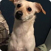Adopt A Pet :: Walter - Lodi, CA