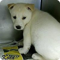 Adopt A Pet :: Koda - Mooresville, IN