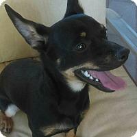 Adopt A Pet :: Reacher - PHOENIX, AZ