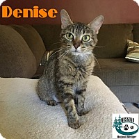 Adopt A Pet :: Denise - Big Green Eyes! - Huntsville, ON