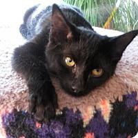 Adopt A Pet :: Boris - Eugene, OR