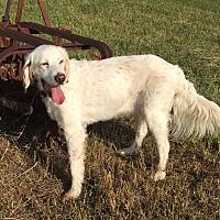 Adopt A Pet :: HUNTER - Pine Grove, PA