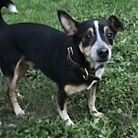 Adopt A Pet :: Stetson - Va Beach, VA