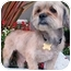Photo 2 - Lhasa Apso Mix Dog for adoption in Los Angeles, California - BODHI