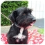Photo 1 - Terrier (Unknown Type, Medium) Mix Dog for adoption in Coral Springs, Florida - Sally
