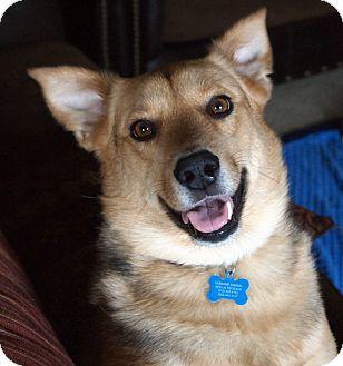 German Shepherd Dog Mix Dog for adoption in Humble, Texas - Zachary