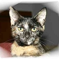 Adopt A Pet :: Shellie - Montgomery, IL