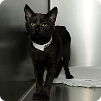Adopt A Pet :: Sapphire - Farmingdale, NY