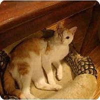 Adopt A Pet :: JoJo - Muncie, IN