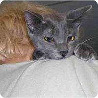 Adopt A Pet :: Itsaboy - Lombard, IL