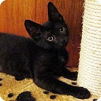 Adopt A Pet :: Mikayla - Brooklyn, NY