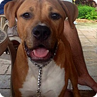 Adopt A Pet :: ROCCO - Brooksville, FL