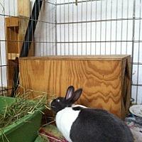 Adopt A Pet :: Maka - Harrisburg, PA