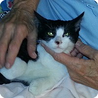Adopt A Pet :: Edwina - Redondo Beach, CA
