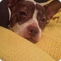 Adopt A Pet :: Fiona - Plainfield, IL