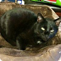 Adopt A Pet :: Frankie - Transfer, PA