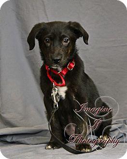 Labrador Retriever Mix Puppy for adoption in Newcastle, Oklahoma - Jake