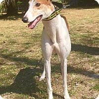 Adopt A Pet :: Motion - West Palm Beach, FL