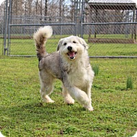 Adopt A Pet :: Xenon - Savannah, TN