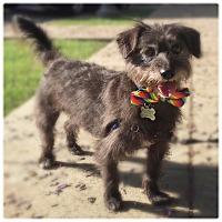 Adopt A Pet :: BILBO - Glendale, CA