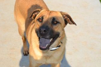 Shepherd (Unknown Type) Mix Dog for adoption in troutman, North Carolina - BIANCA