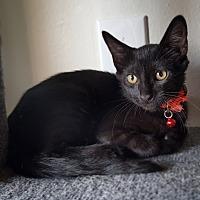 Adopt A Pet :: Salem - Culver City, CA