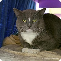 Adopt A Pet :: Iago - Tucson, AZ