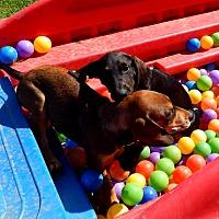 Adopt A Pet :: Gia and Lennox - Washington, PA