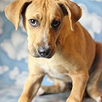 Adopt A Pet :: Varick - Waldorf, MD