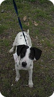 Hound (Unknown Type) Mix Dog for adoption in Waldorf, Maryland - Oz #389