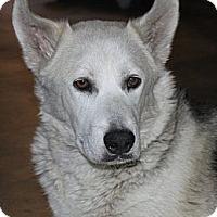 Adopt A Pet :: Gracie Lou - La Habra Heights, CA
