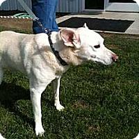 Adopt A Pet :: Chance Wilson - Southampton, PA