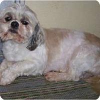 Adopt A Pet :: Twirly ADOPTION PENDING!! - Antioch, IL