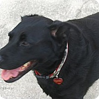 Adopt A Pet :: Inky - Jacksonville, FL