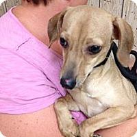 Adopt A Pet :: Race/Max - Rockaway, NJ