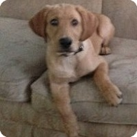 Adopt A Pet :: Wonder - Wilmington, MA