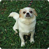 Adopt A Pet :: Relayna - Plainfield, CT
