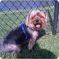 Adopt A Pet :: Sushi - Homestead, FL