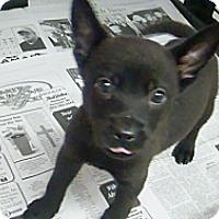 Adopt A Pet :: Coal - Philadelphia, PA