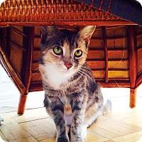 Adopt A Pet :: Della - Brooklyn, NY
